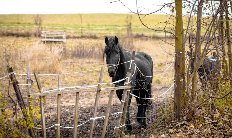 2782017-skinny-horse-outside-in-fenced-yard-area