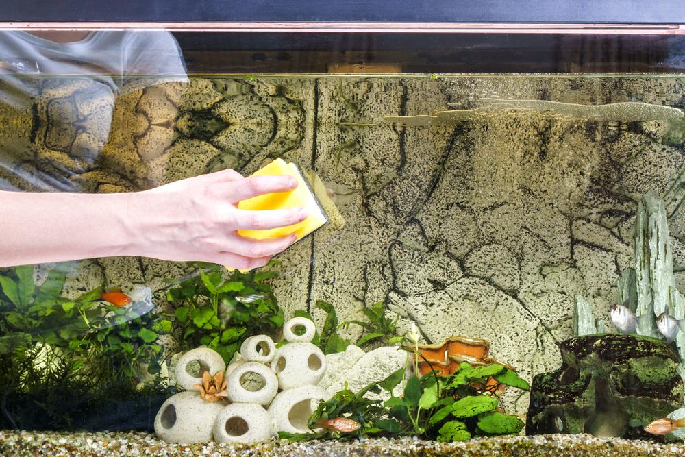 Rengöring av akvarium